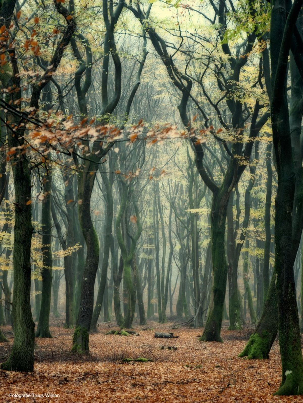 10dansende bomen Drie