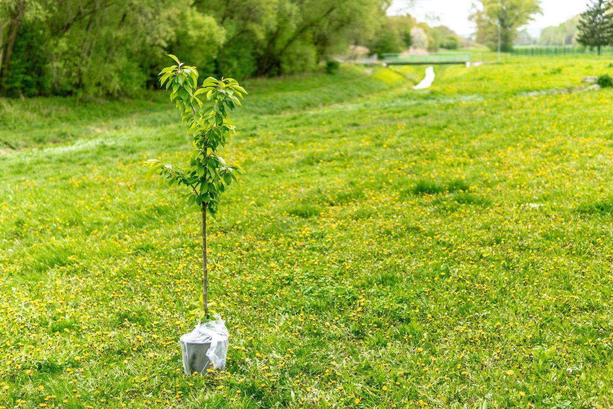 Boom planten in eigen tuin